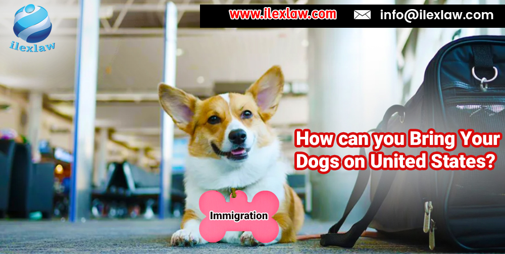 pets immigration process